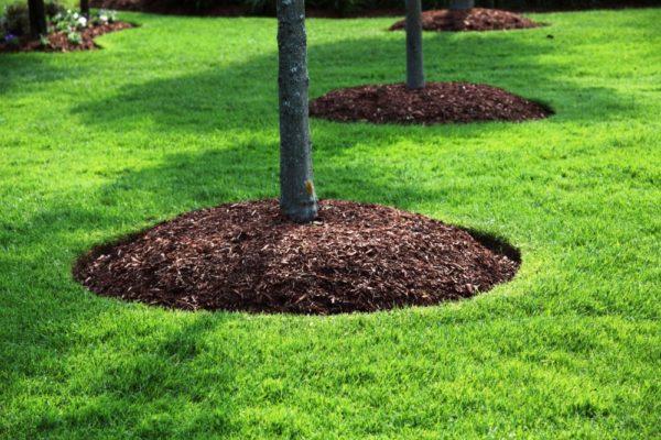 Мульчирование почвы в саду