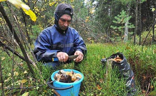 Мужчина, осуществляющий предварительную чистку грибов в лесу
