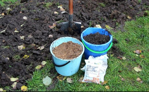 Подготовка участка к посадке малины