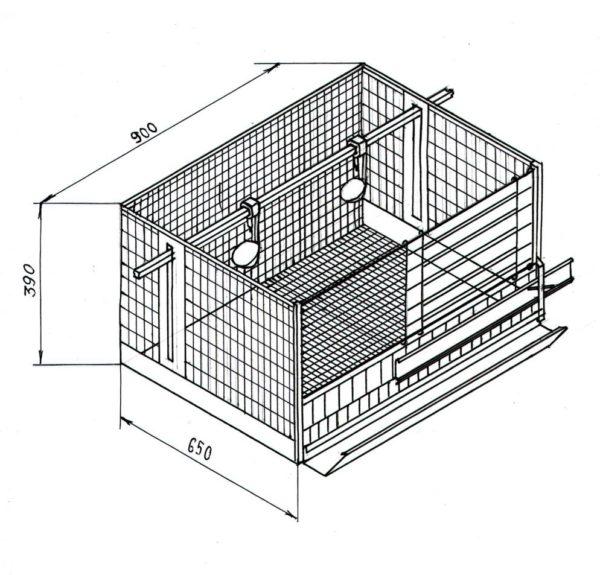 Схема сетчатой клетки для перепелов