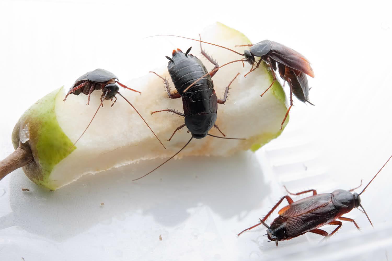 Как избавиться от тараканов в 92