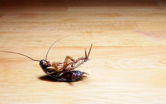 Таракан умирает на спине