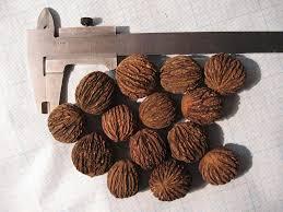 Как колоть чёрный орех