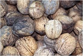 Как выглядит плесень на орехах