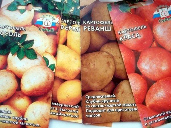 Магазинные семена картофеля