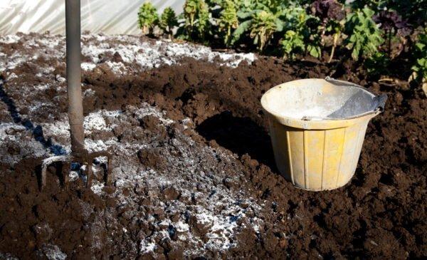 Подготовка почвы для посадки малины