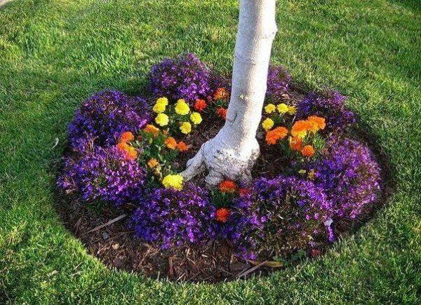 Приствольный круг груши с цветами