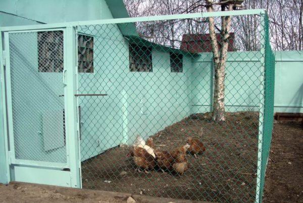 Ограда курятника