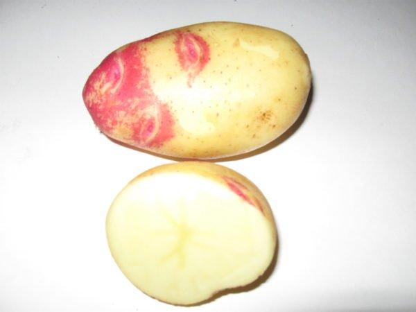 Внешний вид клубня картофеля Иван-да-Марья