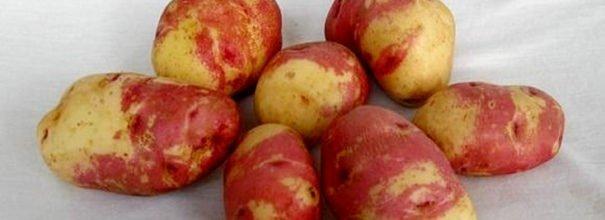 картофель иван-да-марья