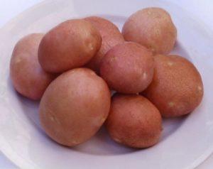 Картофель сорта Славянка