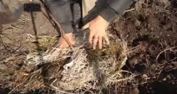 Мульчирование почвы вокруг саженца