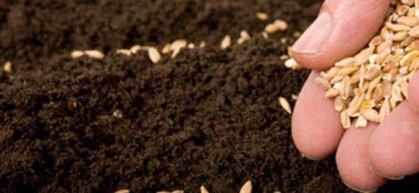 Посев семян в грунт