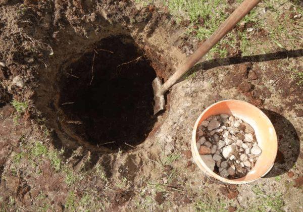 Подготовка ямы для сливы