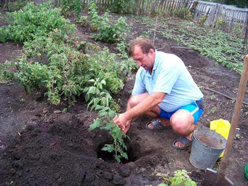 Малина уход весной советы бывалых садоводов