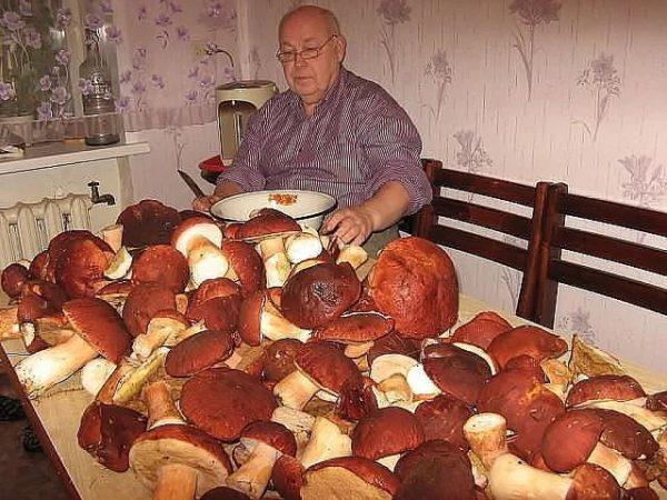 Много грибов на столе