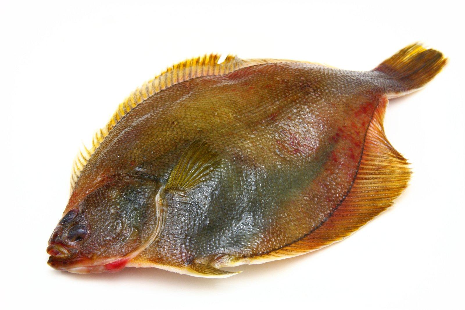 Рыба хек под маринадом рецепты с фото выкройку