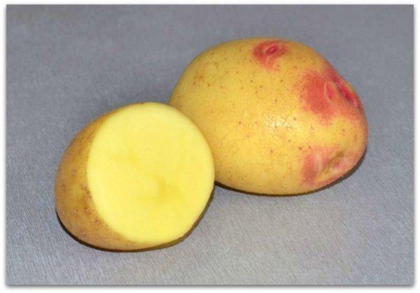 Разрезанный корнеплод Лимонка