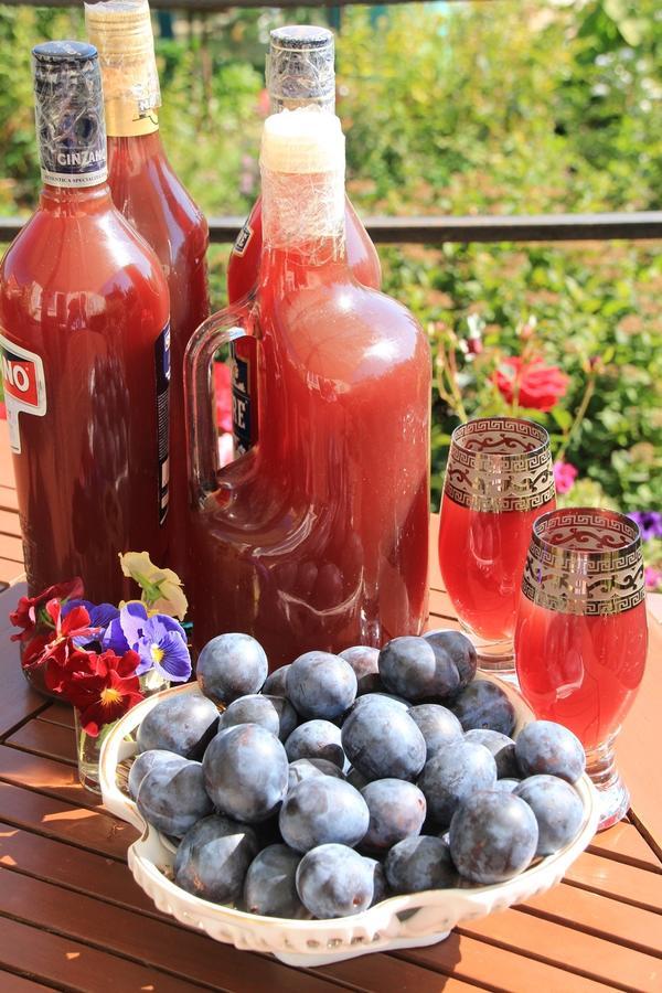 Рецепт вина из сливы рецепт вина из сливы в домашних условиях