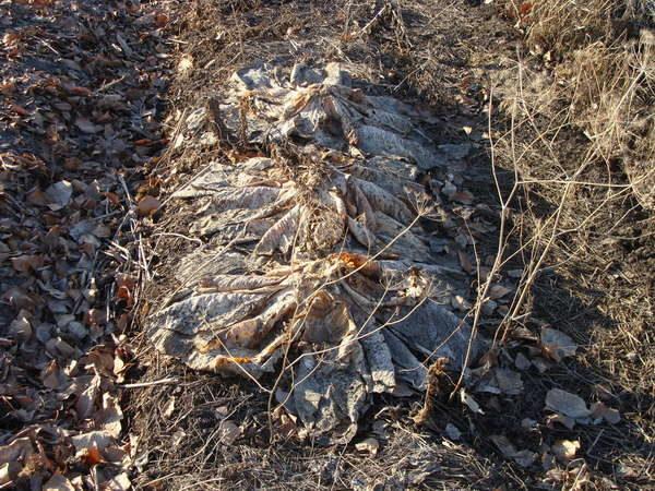 Органические капустные остатки на грядке