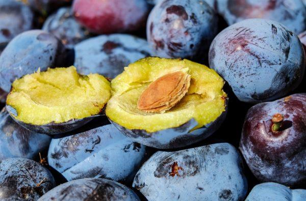 Плод сливы с косточкой