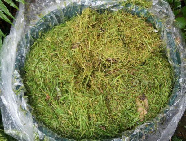 Заквашенная трава