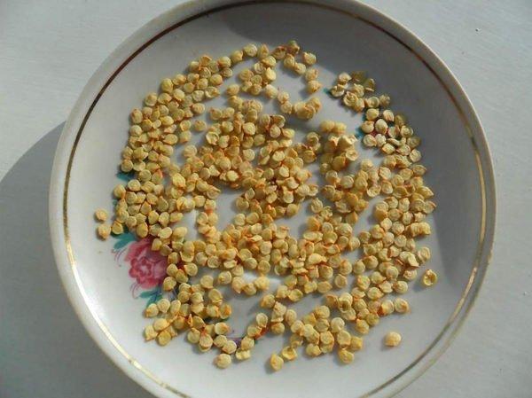 Семена перца чили на тарелке