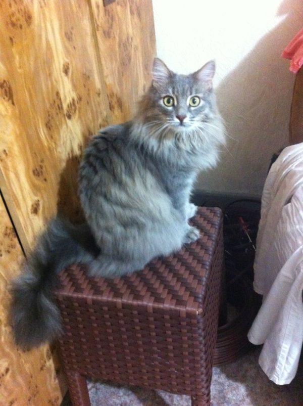 Кот на плетёном стуле