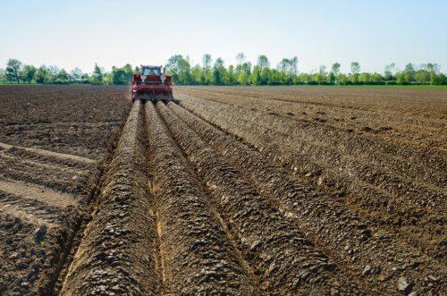 Обработка почвы под посадку картофеля в гребни трактором