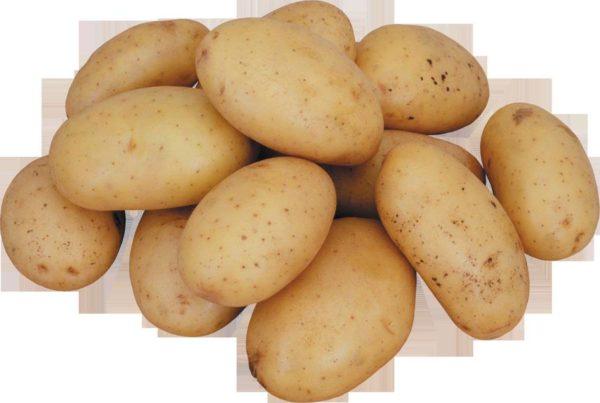 Картофель Атлант
