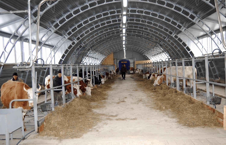 Коровники своими руками проект фото 907