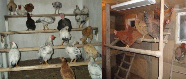 Насесты для курочек