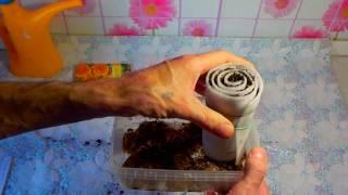 Изготовление «улитки» для рассады в домашних условиях