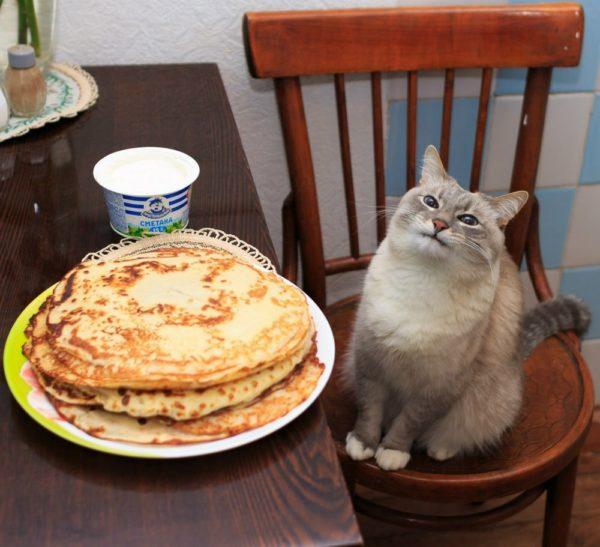 Кот и блины