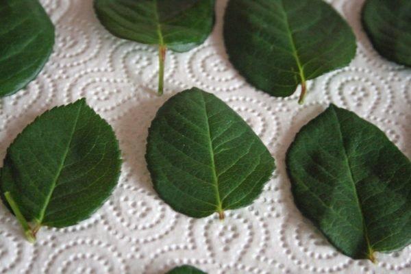 листья розы на салфетке