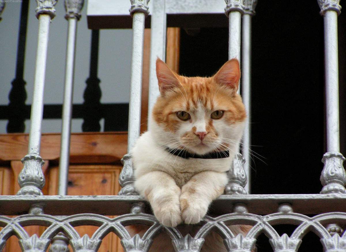 Можно ли котам лизать ошейник от блох