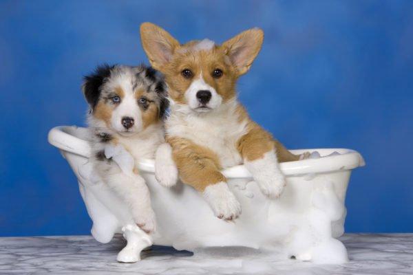 Собаки в ванне