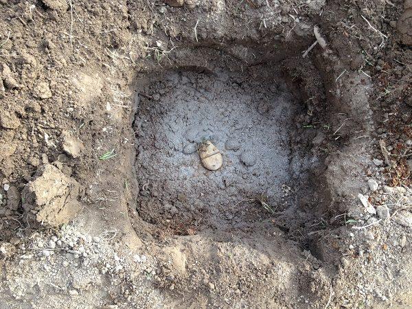 Картофель в яме