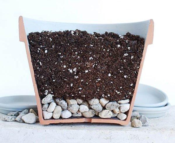 Горшок с почвой