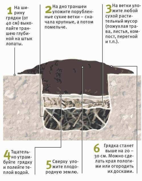 Схема огуречной грядки