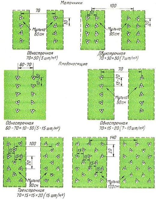 Различные схемы посадки садовой земляники
