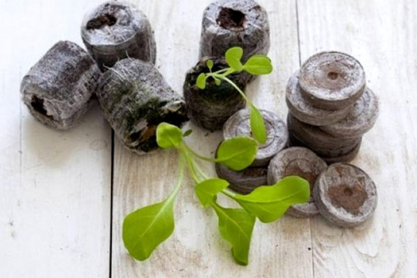Торфяные таблетки для выращивания петунии