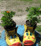 Старые ботинки с цветочными горшками внутри