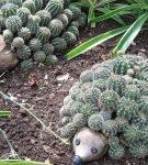 Ёжики из кактусов