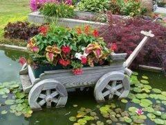 Цветущая телега в воде