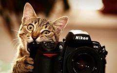 cat with fotikom