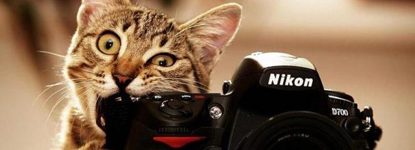 котик с фотиком