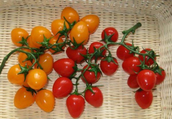 Разноцветные помидоры черри