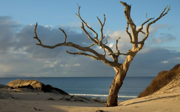 Сухое дерево на берегу моря