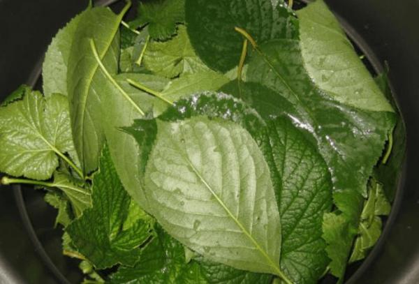 вишневые и смородиновые листья